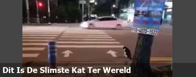 Dit Is De Slimste Kat Ter Wereld