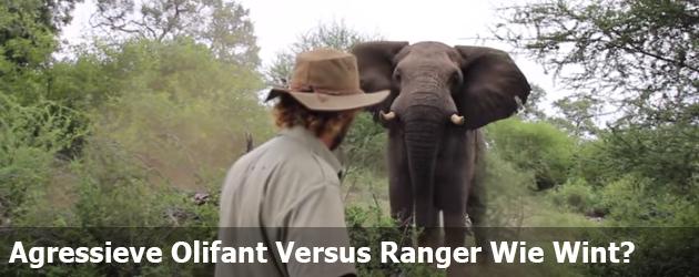 Ranger Jaagt Agressieve Olifant Weg Door Hem Streng Aan te Kijken