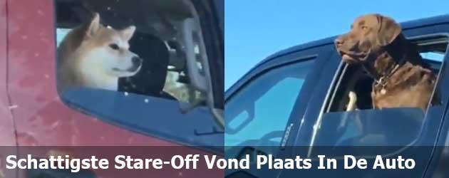 Schattigste Stare-Off Vond Plaats In De Auto