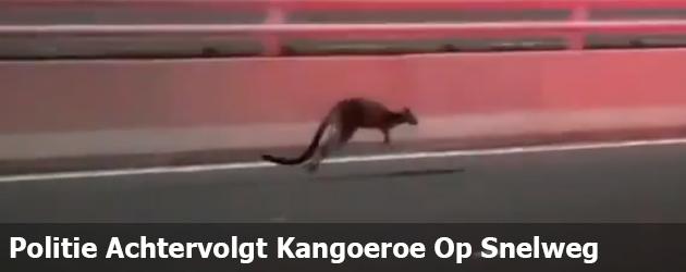 Politie Achtervolgt Kangoeroe Op Snelweg