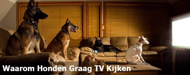 Waarom Honden Graag TV Kijken