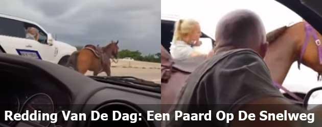 Redding Van De Dag: Een Paard Op De Snelweg